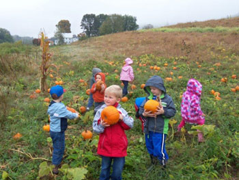 my little angels daycare pumpkin picking